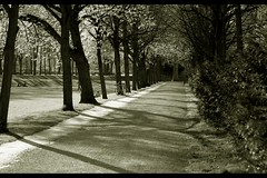 Allee - Avenue (Lights and Shadows) (BEN_GER) Tags: park trees light shadow bw sun sunlight white black nature d50 germany spring nikon bonn sunday natur parkway lane sw avenue sonne bume schatten allee rheinaue 55200 sonnenlicht