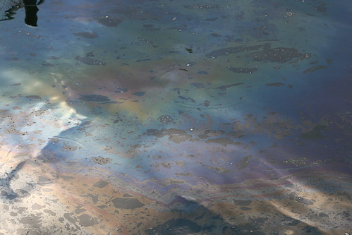 Oil Slick at Percival Landing