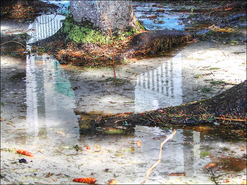 Spring-Reflections-III