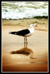 Quiet Bird on Noisy Beach - by Ric e Ette