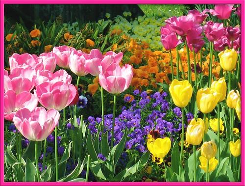 花畑|無料写真素材