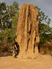 Termite Mounds: Big