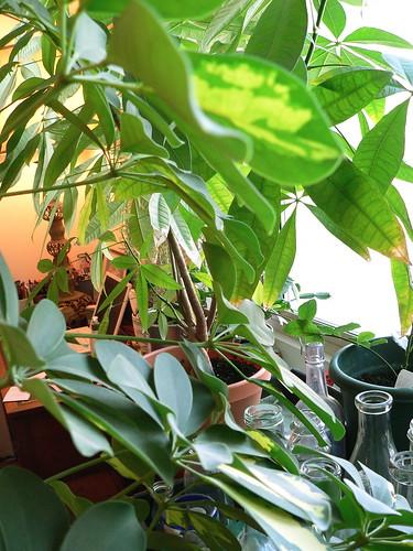 Green apartment jungle