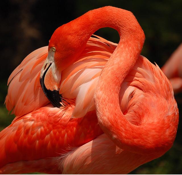 Розовый фламинго обои