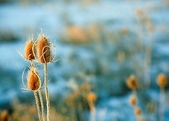 Wild Weed (Todd Klassy) Tags: christmas winter light wild sky snow plant blur cold color colour art classic ice nature beautiful wisconsin rural season landscape dead outdoors death design weed frost shadows dof grove bokeh background thistle fineart country vision pasture form shape hue wi vegitation stockphoto artistry winterlandscape stockphotography royaltyfree ruralscene rightsmanaged ruralwisconsin winterinwisconsin toddklassy
