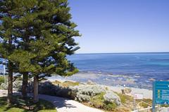 Trees at Watermans Beach