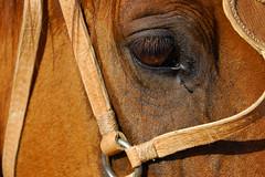 O cavalo - by Eduardo Amorim