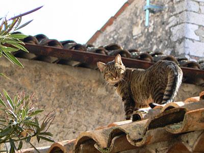 chat valbonne 2