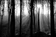 sun filtered through mist and trees (andy carson) Tags: mist ray eos10d sunbeam clitheroe tolkein crgs lothlorien mirkwood andycarson serenityinblackandwhite