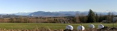The View - From A Hilltop Near Abbotsford BC (rog45) Tags: panorama landscape 300d bc pano kit fraserriver mtbaker abbotsford fraservalley sumasmountain mtcheam rog45 cans2s