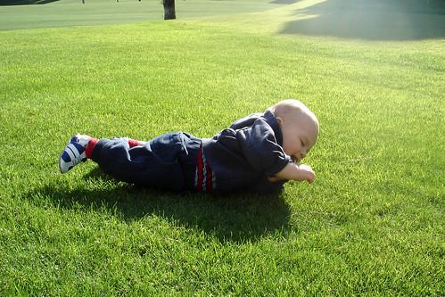 no grass!