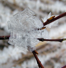 Ice flower II (LaStef) Tags: ice iceland frost womenonly eyjafjordur icecrystal iceformation