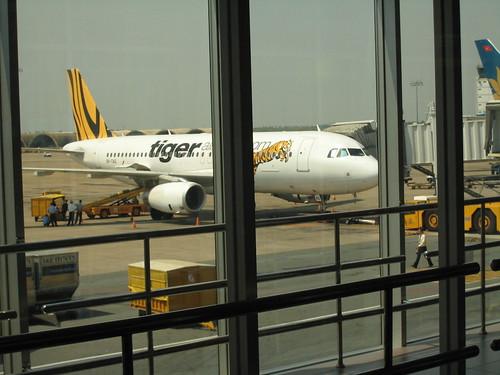 有沒有看過 tiger airlines?