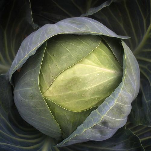 Cabbage #2