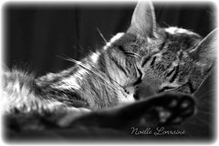 """It's a dog's world (Noelle Lorraine Photography~ """"Art In Action"""") Tags: bw classic love home beautiful dave cat friend tiger blueribbonwinner canon400d"""