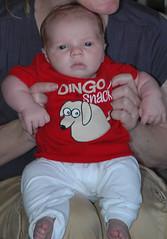 DingoSnack2.jpg