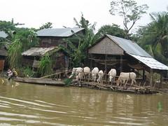Sangkar River