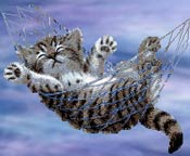 cat_hammock.jpg