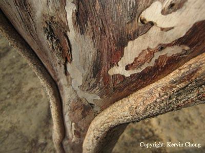 Bark-texture