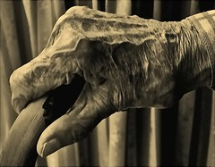A hand in need (algo) Tags: bw photography topf50 topv555 bravo hand minolta quality topv1111 topv999 elderly utata stick a1 topv9999 algo oldage topv100 100f topv7777 magicdonkey abigfave artlibre 70312 200750plusfaves diamondclassphotographer flickrdiamond hintofsepia
