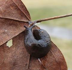 Slug 2