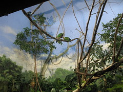 Louisville Zoo 2007 (mishkali) Tags: louisvillezoo