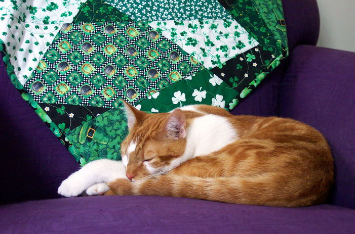 St. Patrick's Day quilt w/ Biscuit