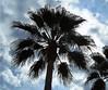 palm (Ron in Blackpool) Tags: spain ron alicante region oldtown curtis costablanca lavilajoiosa comarca alcant alicant marinabaja marinabaixa vilajoiosa roninblackpool roncurtis