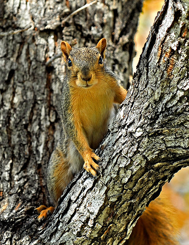 CO Squirrel