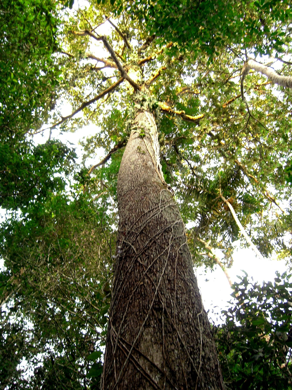a symbiotic relationship in the tropical rainforest