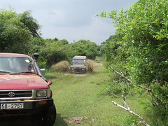 yala sathmaga (maithree) Tags: park travel camping friends india holiday color nature animals cat fun zoo asia jeep 4x4 hiking sri lanka hilux