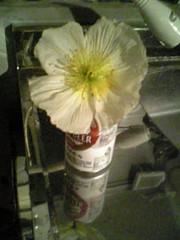 FLOWER @ [aa88]