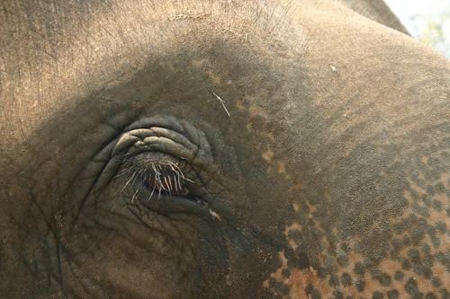 Elephant camp. Chiang Mai Province.