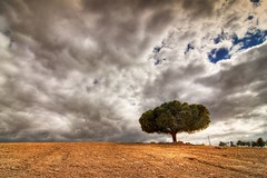 The survivor (cuellar) Tags: sky tree lines clouds landscape arbol bravo alone cuellar cielo solo nubes shape solitario survivor congrats superviviente interestingness4 nikond200 magicdonkey distritoc anawesomeshot cuellar2007top20