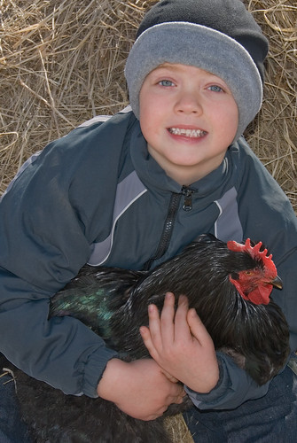 Brent and the chicken