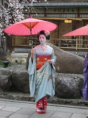 Geisha with a Japanese umbrella in front of cherry blossoms at the Gion-shirakawa festival in Kyoto 4