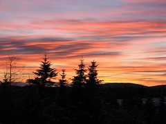 Markland sunset 3 (dacardoso) Tags: sunset red orange tree newfoundland farm markland