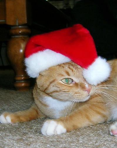 Christmas Gary