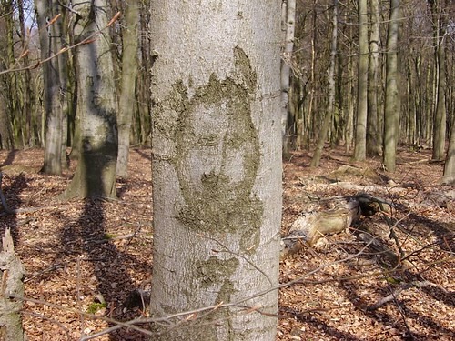 Gesicht im Baum - Face in the tree