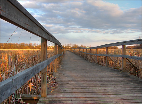The Boardwalk - Lynde Marsh