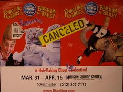 Canceled (Rachel Pincus) Tags: newyork circus animalrights vandalism tigers gothamist abuse bello ringlingbros barnumandbailey bellobration