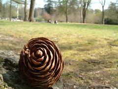 Pine Cone Macro (Kaptain Kobold) Tags: park uk macro surrey pinecone mwb virginiawater kaptainkobold royallandscape