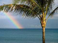Maui rainbow with Palm Tree (rhett maxwell) Tags: tree bay rainbow maui palm creativecommons whoa doublerainbow napili  whatdoesthismean alltheway