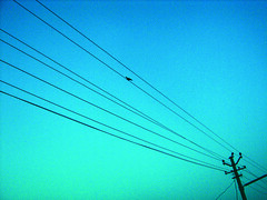 Fly away (Aditya Rao.) Tags: blue sky india bird lines composition canon dawn university village cross pigeon cyan roadtrip pole diagonal clear wires electricity april s2is minimalism current bits rajasthan 2007 cycles haryana pilani jhunjhunu pahadi