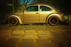 hum for this bug (Janthemanson) Tags: sun car vw bug germany golden automobile side beetle hannover rims kfer youngtimer klagesmarkt sportsuspension