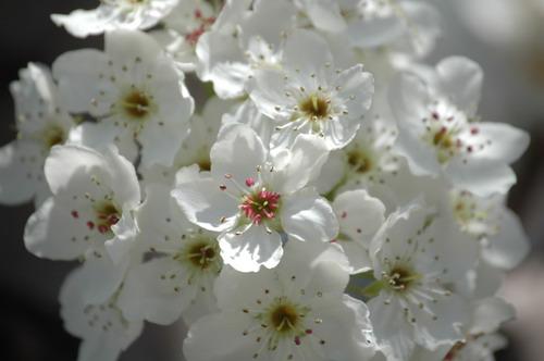Bushwick Blossoms