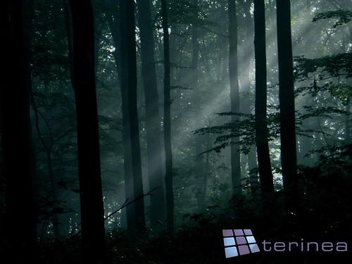 wallpaper dark forest. them to this dark forest!
