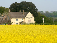 Thames Head Inn (Canis Major) Tags: yellow thames pub inn gloucestershire source cirencester thameshead fossway 10to1