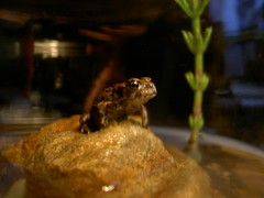 Mortimer the Frog