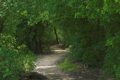 Follow Me (Peter Baer) Tags: california path trail utata cosumnesriverpreserve pjb1378pjb01b wanderingway wanderingpath